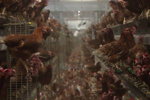 Le second élevage de poules situé à Eragny-sur-Epte dans l'Oise du propriétaire ciblé par l'association Vegan Impact