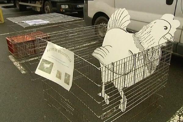 Dès le 20 février, au marché de Louhans, en Bresse, 3 éleveurs pourront vendre des volailles vivantes sus certaines conditions