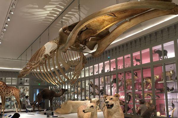 La grande salle a gardé son caractère authentique. On y retrouve une partie des riches collections du Museum d'histoire naturelle de Bordeaux.