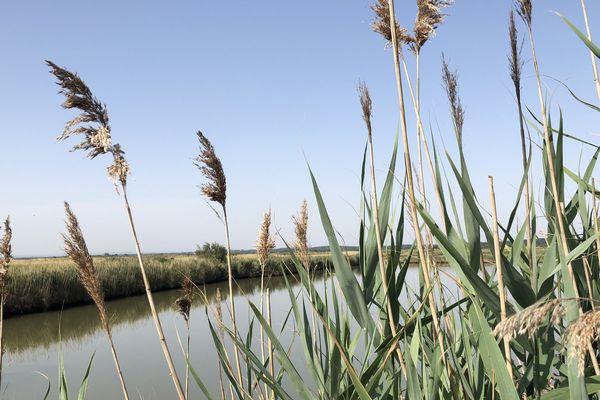 Les marais du Médoc : une immersion dans la nature