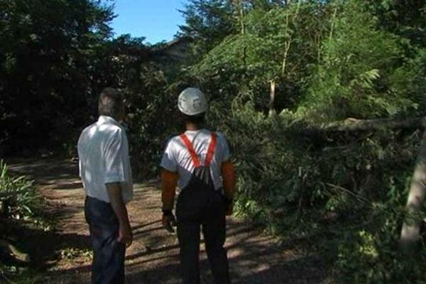 Près de 200 arbres ont souffert des forts coups de vent qui ont accompagné les violents orages du 22 juillet dernier.
