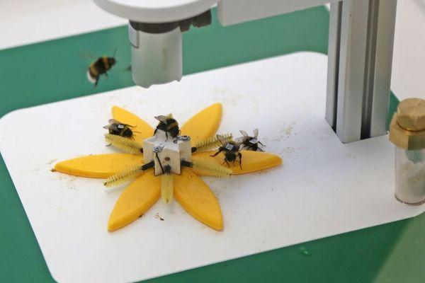 """La fleur """"connectée"""" délivre du pollen et du nectar en quantité contrôlée et enregistre la visite de chaque abeille"""