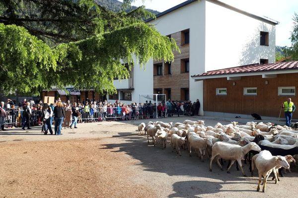 Une partie de la cour de l'école avait été réservée aux moutons.