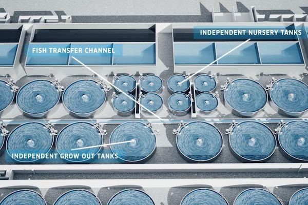 les parcs d'élevage de saumon en circuit fermé