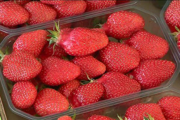 Préparation de la fête de la fraise à Beaulieu-sur-Dordogne