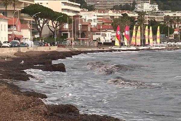 Posidonie, en mars, sur les plages de Cannes