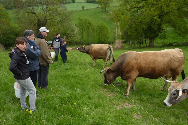 Les visiteurs pourront par exemple approcher les vaches aubracs de la ferme des Bourettes à Haute-Rivoire (Monts du Lyonnais)