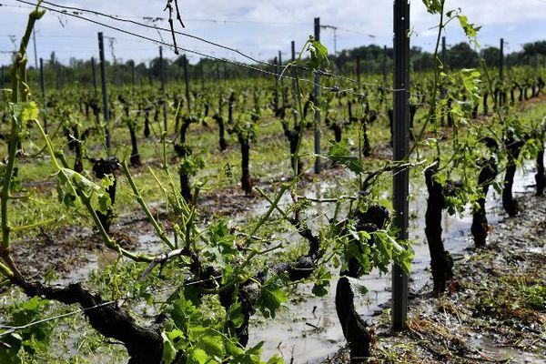 Le vignoble de Macau ravagé après le passage de la grêle le 26 mai 2018.