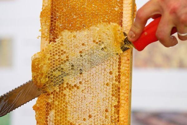 Une production de miel en chute libre pour 2016.