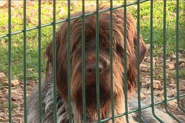 Des chiens de la SPA d'Aix-en-Provence ont été adoptés ce week-end.