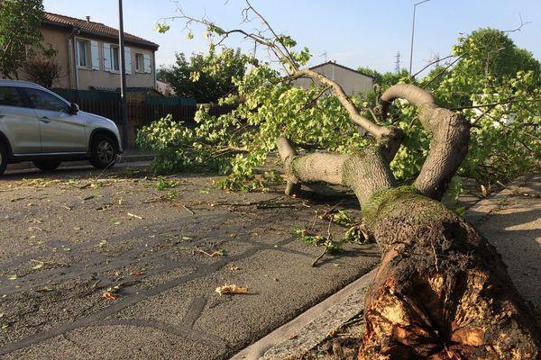 A Saint-Étienne ce mardi 1er juillet au matin, un platane tombé sur une route de la ville vraisemblablement cassé par l'orage d'hier.