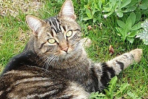 1er refuge de France pour chats errants à Veix en Corrèze