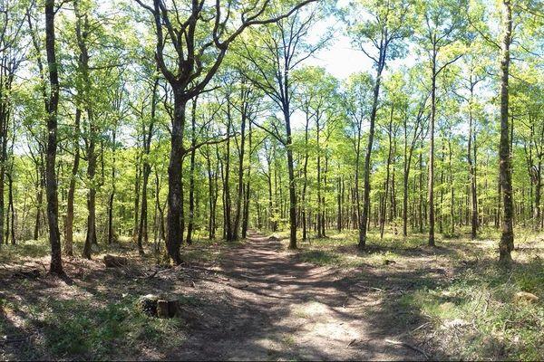 La forêt de Bouconne près de Toulouse