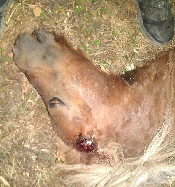 Boulou égorgé et retrouvé mort dans la nuit du 1er au 2 août