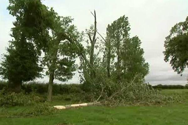De nombreux arbres de la commune ont été cassés sous l'effet des rafales de vent.