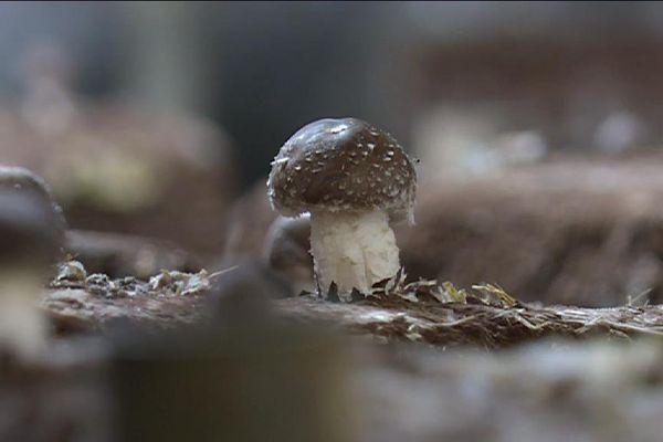 un champignon pousse dans un parking souterrain à Paris