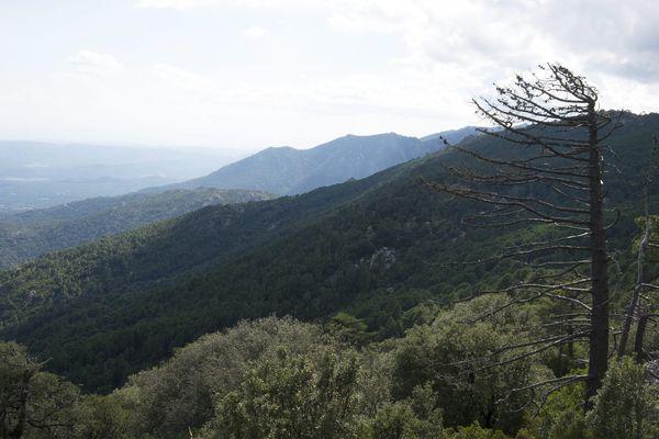 Avec près de 500 000 hectares de forêt, la Corse est la région la plus boisée de France.