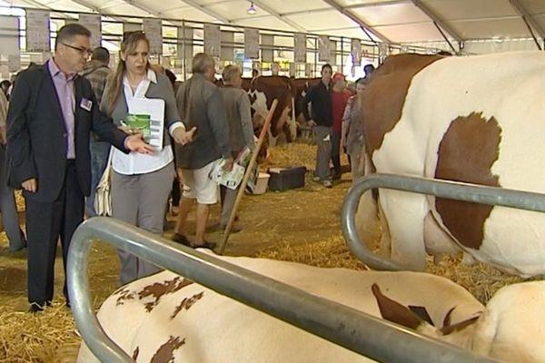 Les vaches laitières françaises intéressent les Algériens qui consomment beaucoup de lait en poudre d'importation faute de production propre en quantité suffisante.