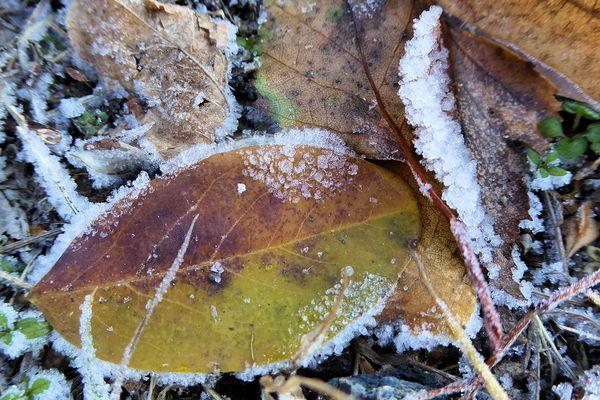 Feuille d'automne et gelée blanche / © Reif - Frost - Gelée by Gertrud K.