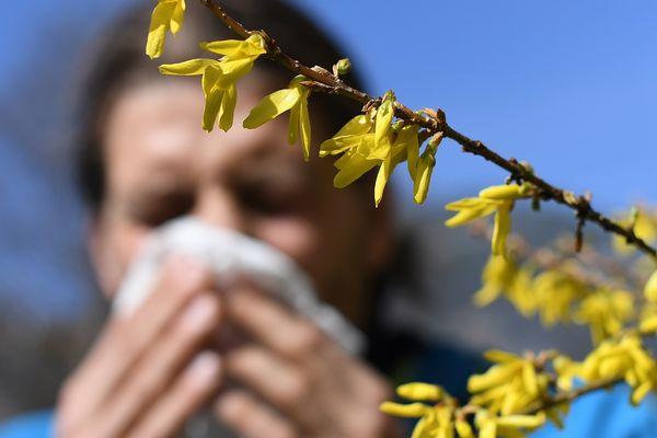 Le risque d'allergie au pollen est élevé voire très élevé en Auvergen-Rhône-Alpes ce mardi 1er juin.
