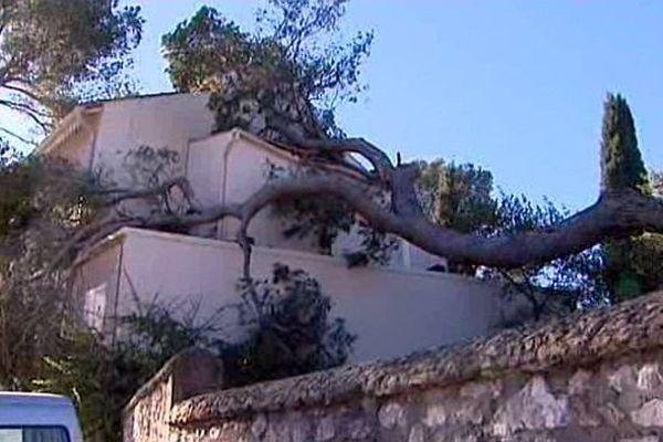 Nîmes - les arbres arrachés après les vents violents du week-end - 9 février 2015