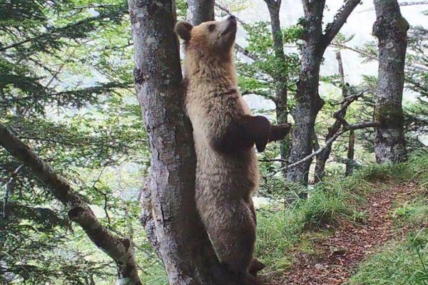 L'Office français de la biodiversité a publié mardi une sélection de vidéos montrant des ours bruns dans les Pyrénées.