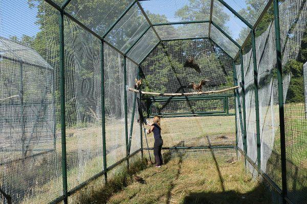 Il faut de grandes volières pour les rapaces.