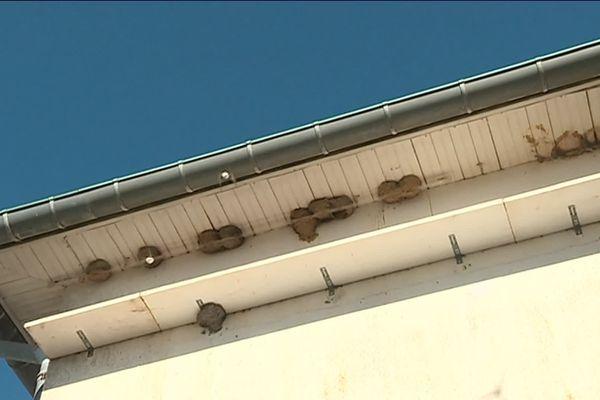 500 hirondelles vivent d'avril à fin septembre à l'hôtel International à Saint-Berthevin en Mayenne