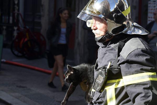 La capture d'un animal par les pompiers est payante dans certains départements