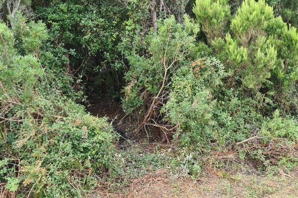 C'est dans le maquis sur les hauteurs de Centuri, en Haute-Corse, que le corps de Damien Barchilon était dissimulé.
