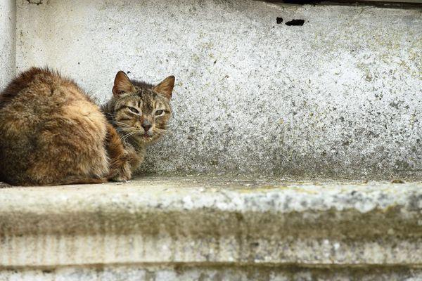 La Spa De Strasbourg Lance Une Collecte De Fonds Pour Steriliser Les Chats Errants