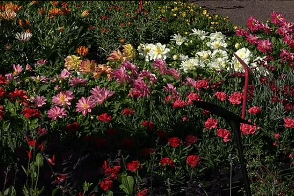 Débauche de couleurs et senteurs dans les jardins des remparts à hennebont