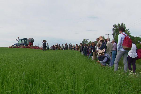 Dans un champ de lin du lycée agricole d'Yvetot, les visiteurs des rencontre lin et chanvre textile bio