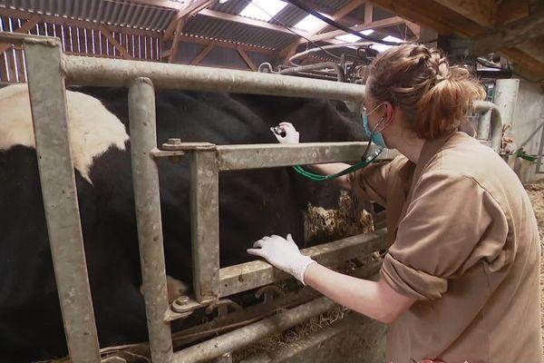 Malgré le Coronavirus, la vie continue dans les exploitations. Les soins des animaux doivent être assurés. Les vétérinaires s'adaptent aux risques.
