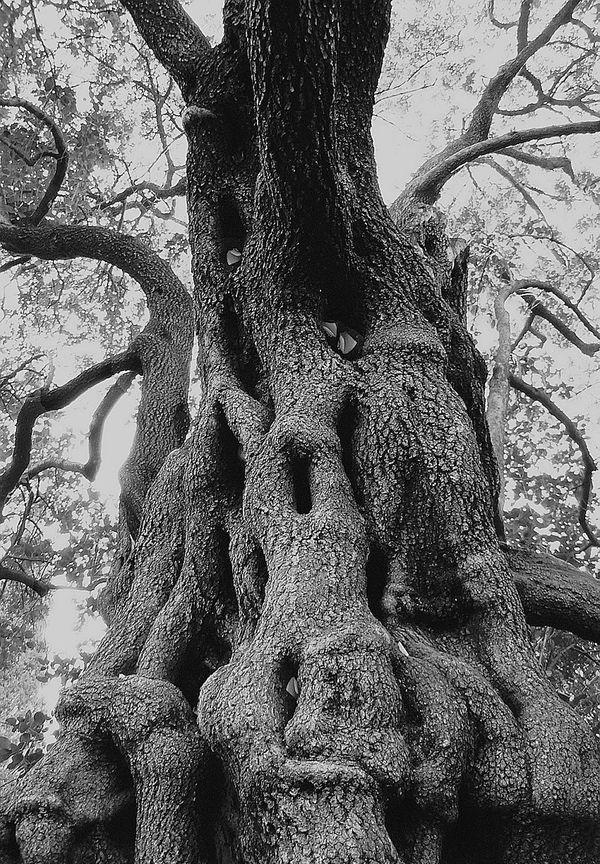 L'arbre de l'Amour du jardin des plantes de Montpellier, qui sert toujours de boîte aux lettres aux mots doux, est le filaire le plus ancien de France. Planté il y a 400 ans, il existait déjà au temps du médecin de l'Amour.