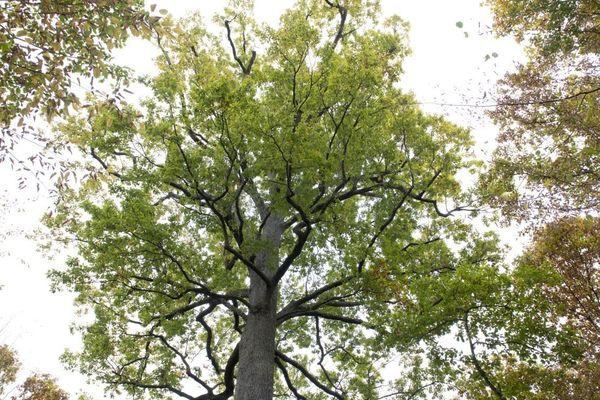 La forêt de la Comté dans le Puy-de-Dôme est interdite au public pour des raisons de sécurité.