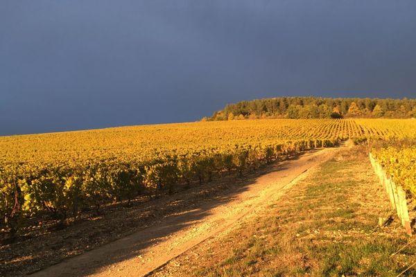 Le vignobles de Chablis, dans l'Yonne