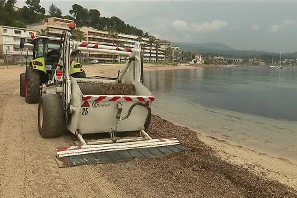 Un tracteur de la commune de Bandol ramasse les posidonies sur la plage.