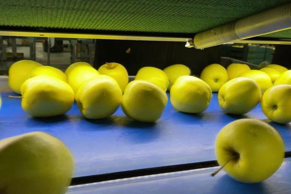 Moins de pommes lors de la récolte et une grande distribution qui ne veut pas payer plus : les pomiculteurs limousins sont plus qu'inquiets.