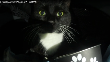 Merlin, le chat de Norman, était hebergé au refuge SPA d'Etalondes (76). / © Capture ecran Youtube
