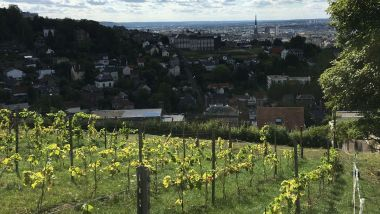 La vigne de Rouen, sur le coteau du Mont-Fortin / © Photo : Richard PLUMET / France 3 Normandie