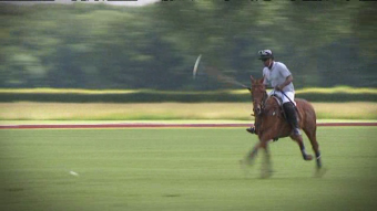 c_sports_polo.png
