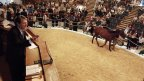Philippe Augier candidat à France Galop