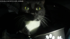 Le youtubeur Norman adopte un chat en Normandie