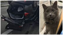 accident A10 - Chat