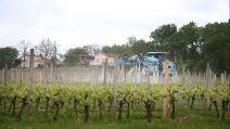 Épandage pesticides vignes