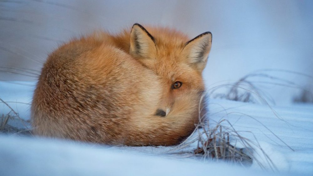 Grand froid : comment protéger les animaux ?