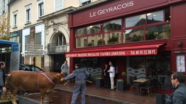 cocasse une vache limousine d barqu e devant un restaurant de limoges france 3 limousin. Black Bedroom Furniture Sets. Home Design Ideas