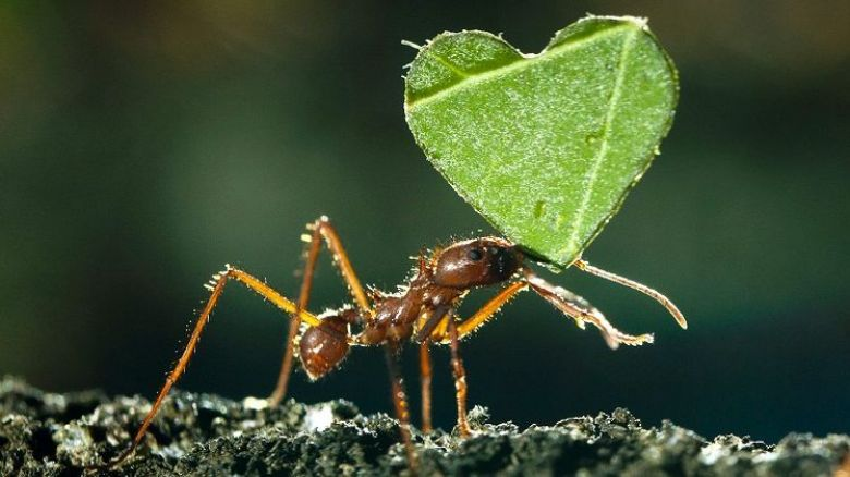 Valentines Day Ants / © London News Pictures Maxppp
