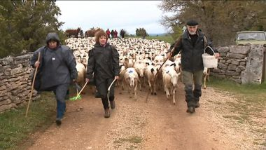Guider 700 moutons sur 68 km / © France 3